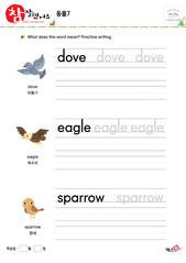 동물 - 비둘기, 독수리, 참새