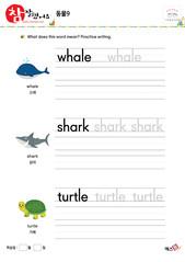 동물 - 고래, 상어, 거북