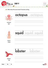 동물 - 문어, 오징어, 가재