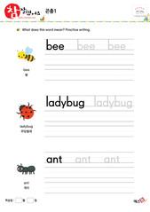 곤충 - 벌, 무당벌레, 개미