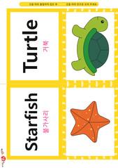 영어 단어 카드 동물 곤충(B형) - 거북, 불가사리