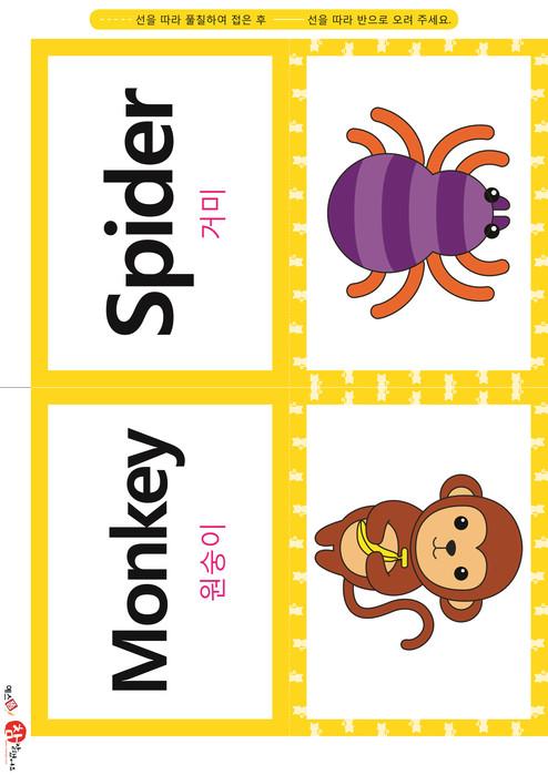 영어 단어 카드 동물 곤충(B형) - 거미, 원숭이