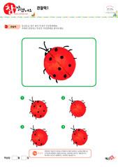 관찰력 - 무당벌레, 빨간색