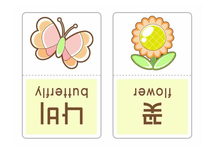 낱말카드꽃나비