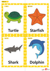영어 단어 카드 동물 곤충(A형) - 거북, 불가사리, 상어, 돌고래