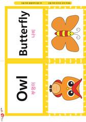 영어 단어 카드 동물 곤충(B형) - 나비, 부엉이