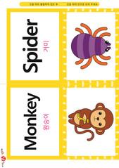 영어 단어 카드_동물_곤충(B형) - 거미, 원숭이