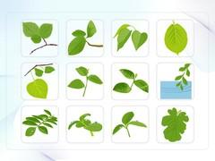 식물, 나무, 나뭇잎, 잎사귀