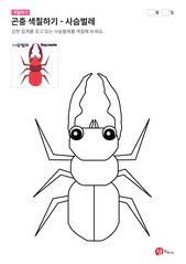 곤충 색칠하기 - 사슴벌레