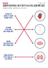 장기 찾기 (뇌,식도,심장,폐) - 답