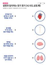 장기 찾기 (뇌,식도,심장,폐)