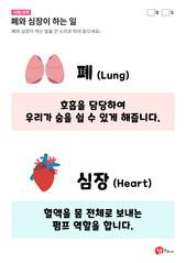 폐와 심장이 하는 일