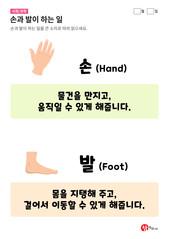 손과 발이 하는 일