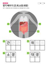 장기 배우기 (간,위,소장,대장)