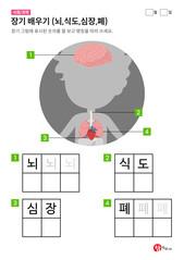 장기 배우기 (뇌,식도,심장,폐)
