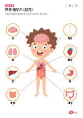 인체 배우기 (장기)