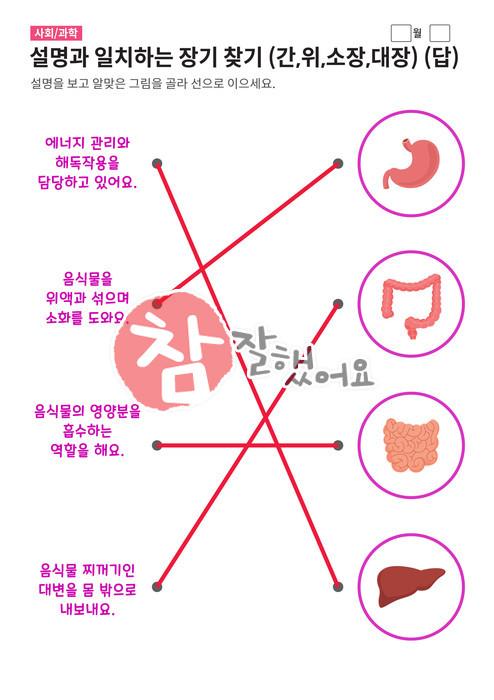 장기 찾기 (간,위,소장,대장) - 답